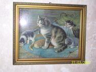 Katzenbild, Jugendstil, Lithografie - Jena
