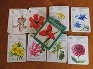 DDR Lehr - Quartettspiel Blütenpracht / Altenburger Spielkartenfabrik 1975 - Zeuthen