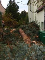 Fällung ihrer Bäume