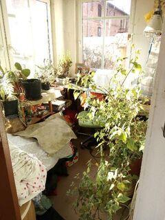 Kräuter: viele pfefferminzen,wasab -,meerettischblatt,pfefferkaut,oregano, Malven, - Neu Kosenow