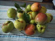 Suchen Obst- und Gemüsereste, Salate usw. für Notfellchen - Sarstedt
