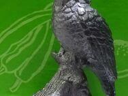 Vogel Eisvogel aus Zinn für Setzkasten - Spraitbach