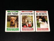 Katzen Hunde Kleintiere - Leben mit Tieren - Nürnberg
